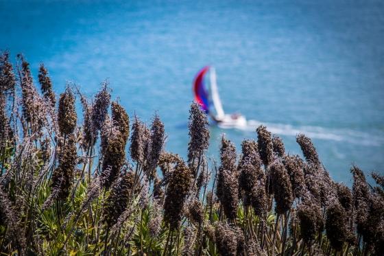 Angel Island, CA | www.sweetteasweetie.com
