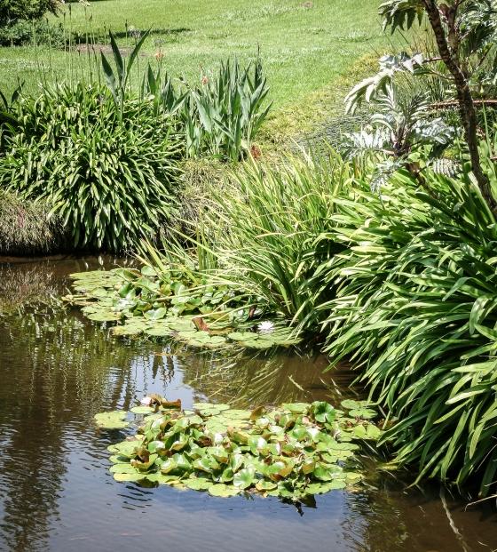 Huntington Library & Gardens in Pasadena, CA www.sweetteasweetie.com