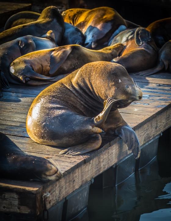San Francisco, CA Pier 39 | www.sweetteasweetie.com